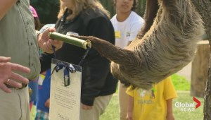 Bob the Sloth shuns scroll from city